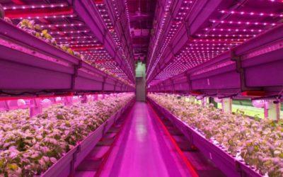 Innovatiepact aan de slag met Vertical Farming